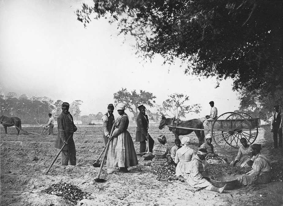 Plantation slaves working in the field